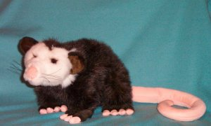 Opossum Plush Toy