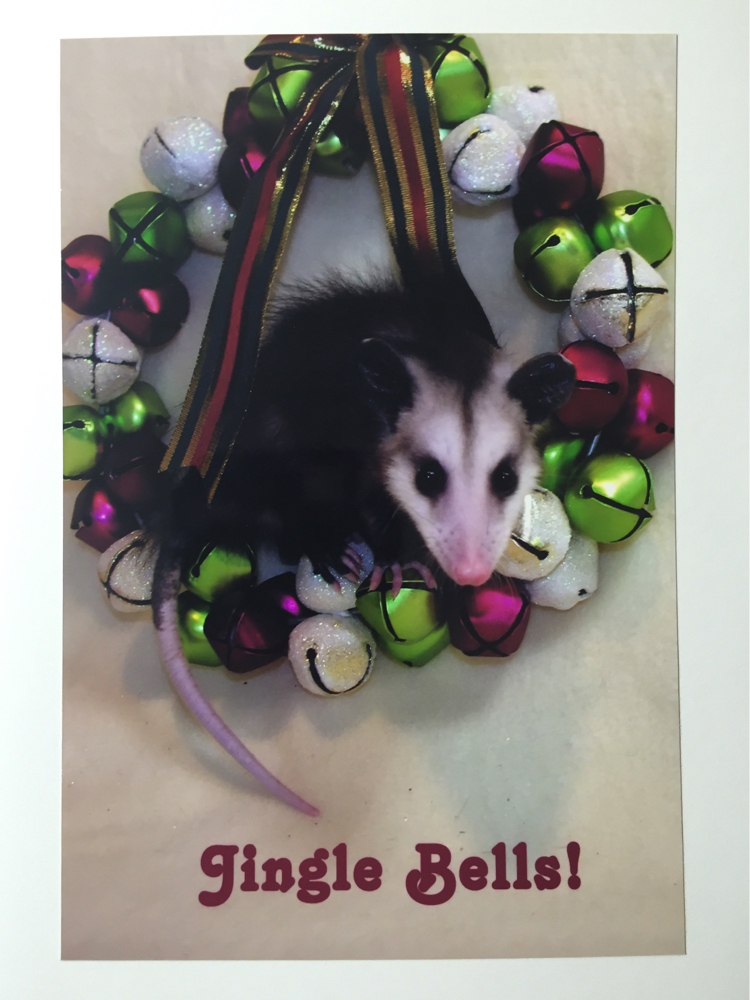 Jingle-Bells-Opossum-Card
