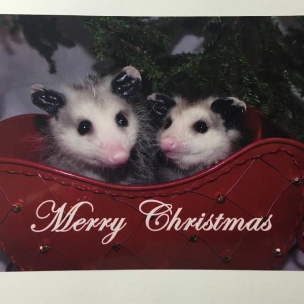 Merry-Christmas-Opossum-Pair