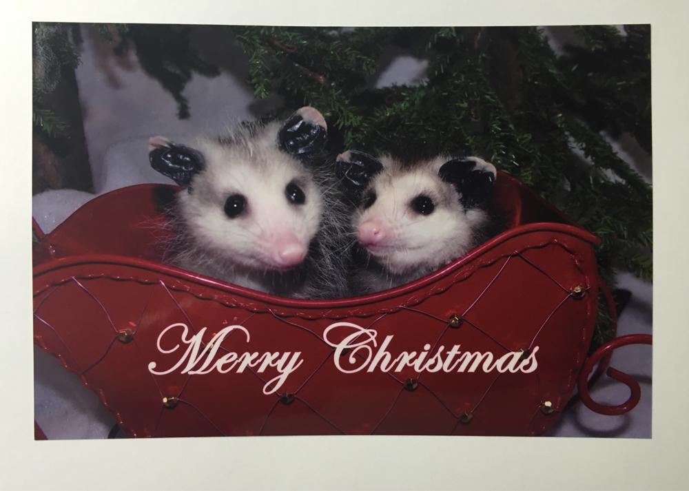 Opossum Christmas Cards | Opossum Society of the United States